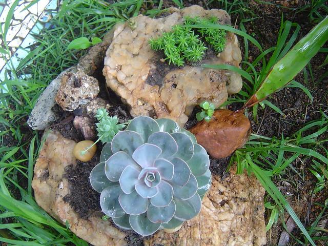 mini jardim de cactus:Jardim de Suculentas
