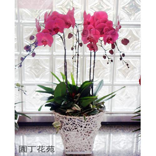 壁纸 仿真 仿真花 仿真植物