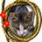 the Gato & Gatas! ♥ Cat & Cats -JOIN US. Adira ao grupo! group icon