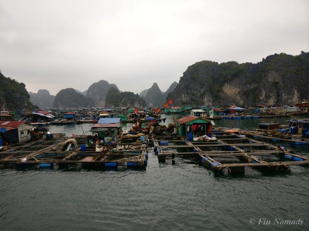 Monkey island halong bay 6