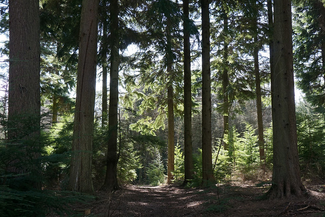 Weekend Walk - Liphook to Haslemere
