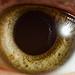 eye by Roland Polczer - www.rolandpolczer.de