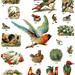 Dover Birds1 by DALAIWMN
