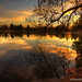 Golden Hour on duck pond - over 1000 comments! Yippeeee! by StanfordSumi