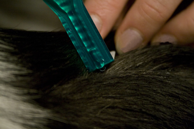 Flea And Tick Control What Products Contain Dangerous