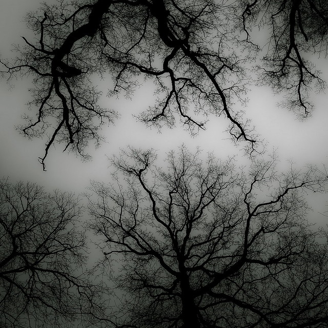 leafless living