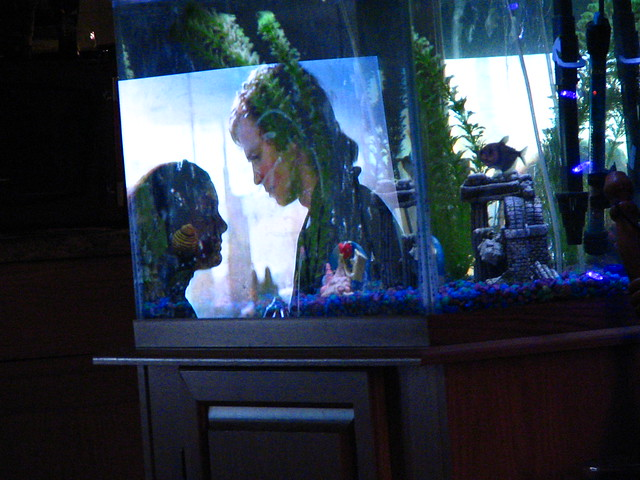 Star wars in the fish tank flickr photo sharing for Star wars fish