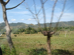 Tree fences