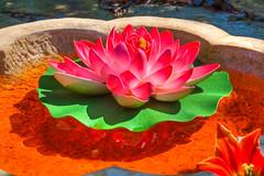 Floating flower - Asianna Gardens