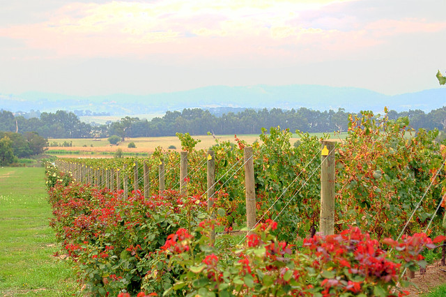 Winery in Australia - Flickr CC little_yiye