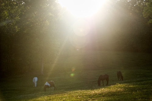 sunset horses southcarolina pasture portfolio bb bedandbreakfast landrum barkingfoxfarms