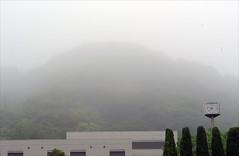 Fog, 20 May 2010