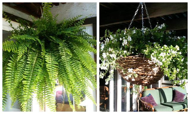 hanging plants for the patio