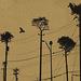 Cuando los árboles se convirtieron en progreso by Adrián Madrid