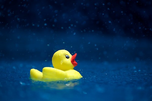 yellow toy duck swimming