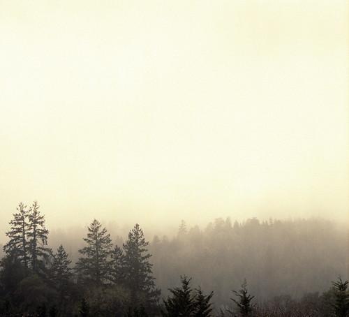 sky mist 120 film forest view ridge hasselblad portra sebastopol furlong 400nc