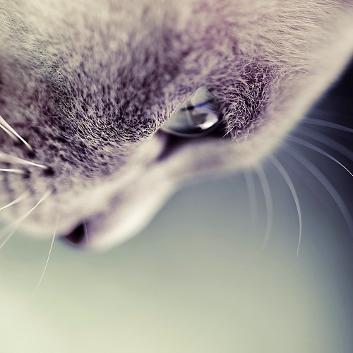 Cat / Animals / Kitten / Photography by ►CubaGallery
