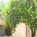 Naranja por MexicoEcoResort