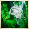the fairie