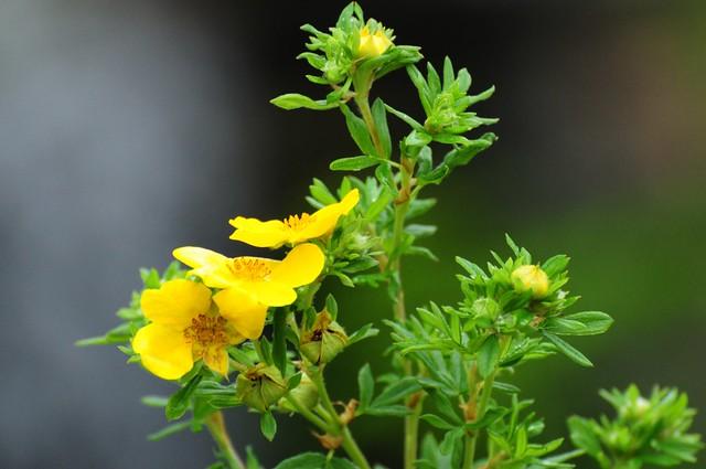 Tiny Yellow Bloosoms.
