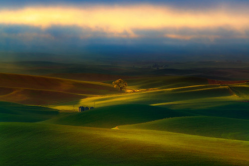 Surreal Morning In The Palouse