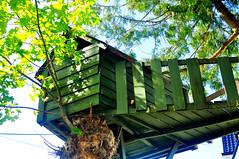 tree, tree house,