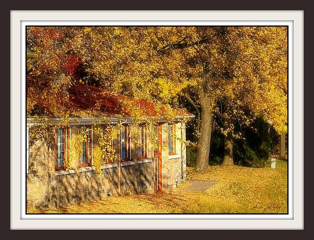 La maison sous les arbres flickr photo sharing for Maison sans toi
