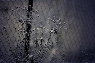 Blossom in winter?