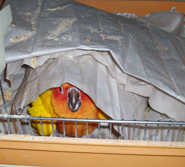 parrot search and rescue