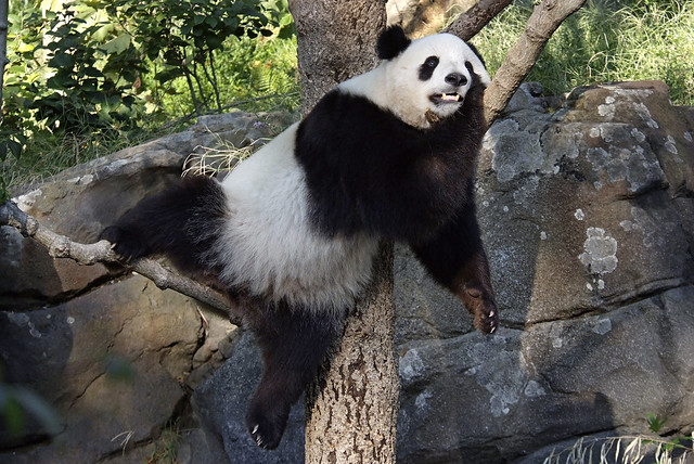 Panda In The Kitchen Menu