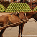Scrawny Horse and Watermelons - Asuncion, Paraguay