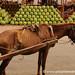 Scrawny Horse and Watermelons - Asuncion, Paraguay