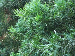 shrub, branch, plant, herb, temperate coniferous forest,
