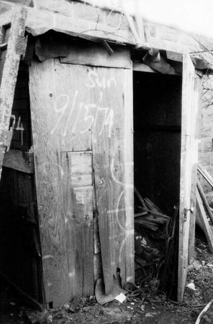 Fig Tree Covering Shack In Brooklyn Flickr Photo Sharing