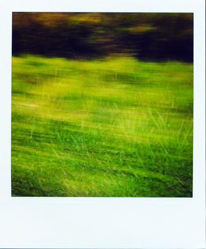 quicklygreen