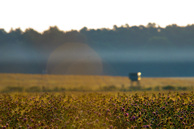 Clover Field, Nationalpark Müritz, Mecklenburg-Vorpommern, Germany