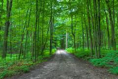 Emerald Road