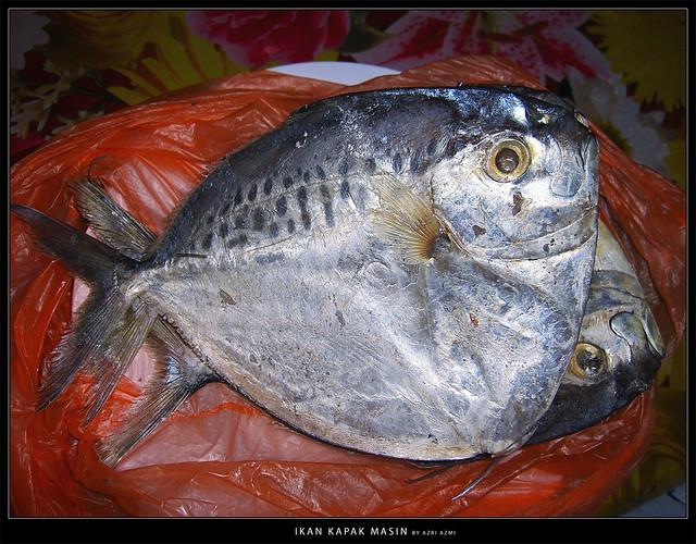 Ikan Kapak Masin   Flickr - Photo Sharing!
