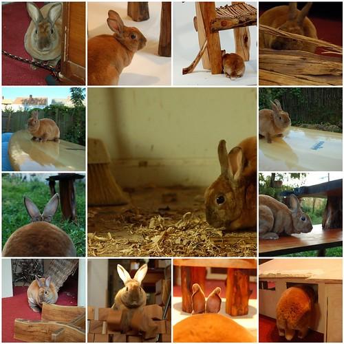 Shop Bunny