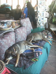 Sleeping dogs in the Desert Tower