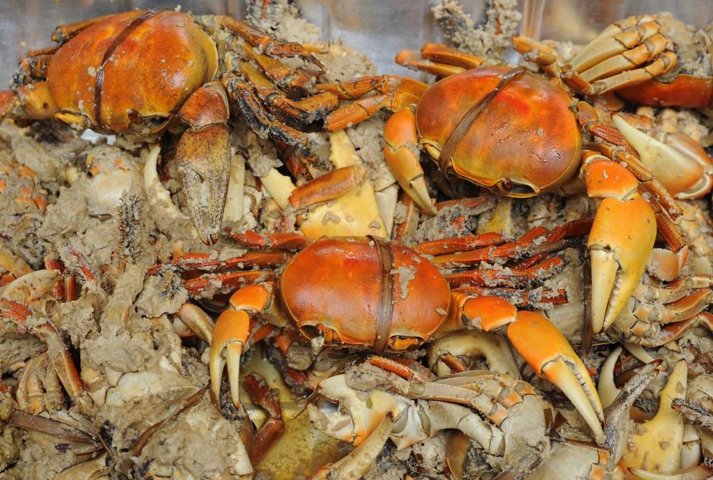 » Pång'lao: Stuffed Land Crab