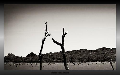 trees arizona blackandwhite lake texture nature river outdoors desert nik borderfx aperture3