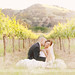 Napa Love by cs.foto (simplybloomphotography)