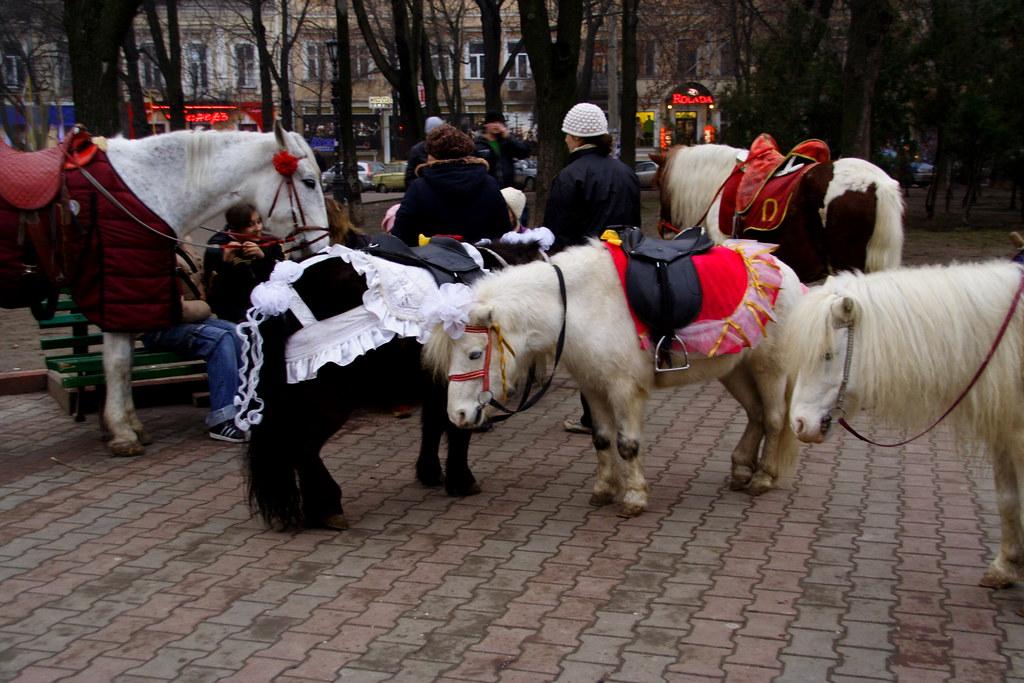 my lil ponies