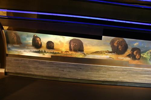 Mural of Human Ancestors