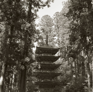 Pagoda in the forest