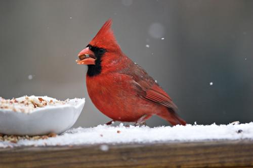 Winter Backyard Birds : backyard birds  Flickr  Photo Sharing!