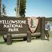 Yellowstone (May/June 2000)