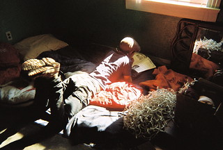 wiley reads in the sunlight on my bed