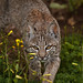 Friendly Feline by Wildphotography - Barry Rowan